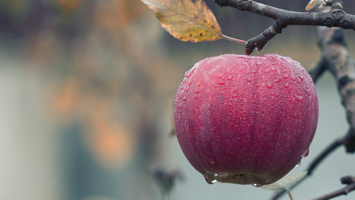 agriculture-apple-blur-257840