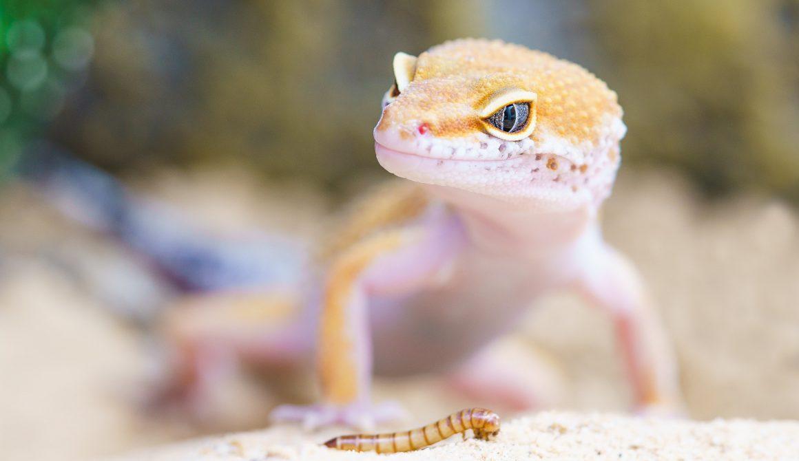 animal-biology-blur-407037