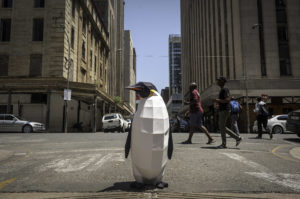 March of the Penguins in Johannesburg