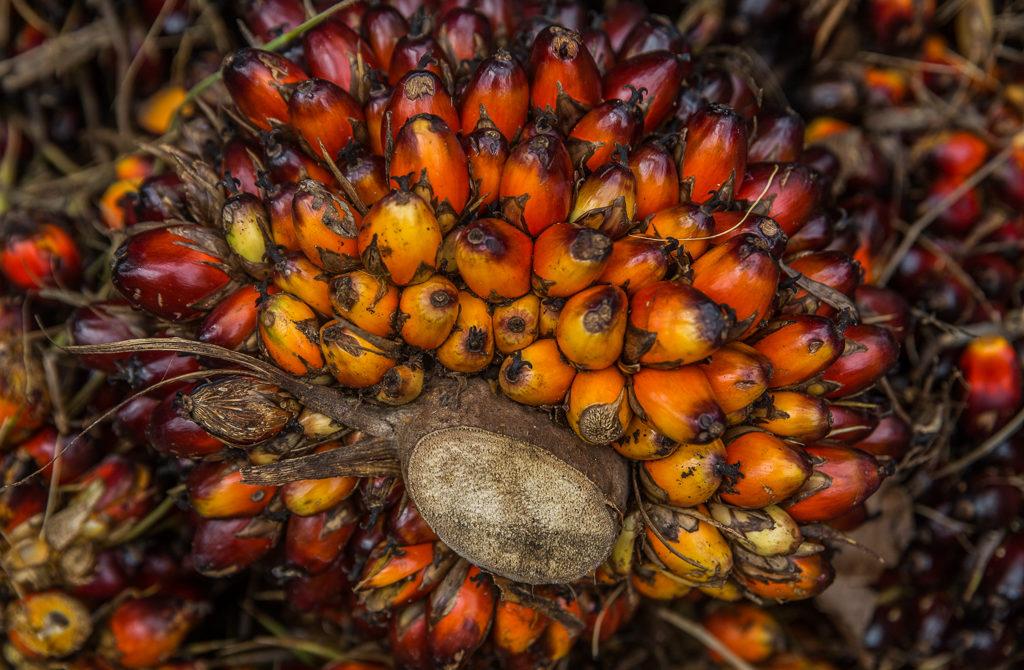 Palmolie, olie, palm, oliepalm