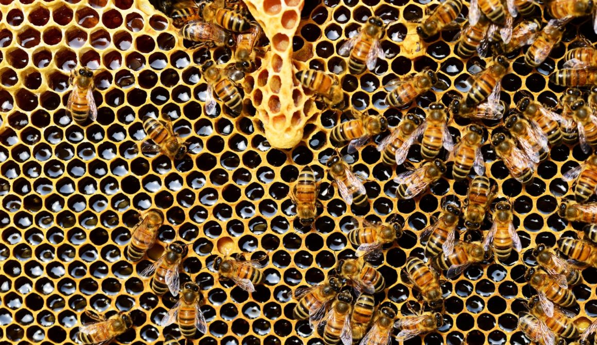 apis-mellifera-bee-beehive-56876-1