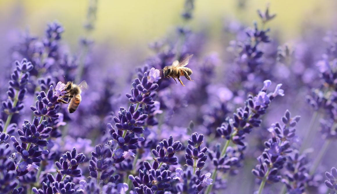bees-bloom-blossom-1644701
