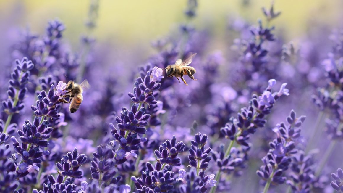 bees-bloom-blossom-1644704