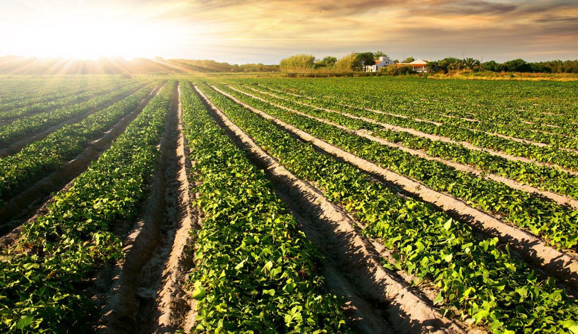 Grains-Oilseeds-Oilseeds-1920