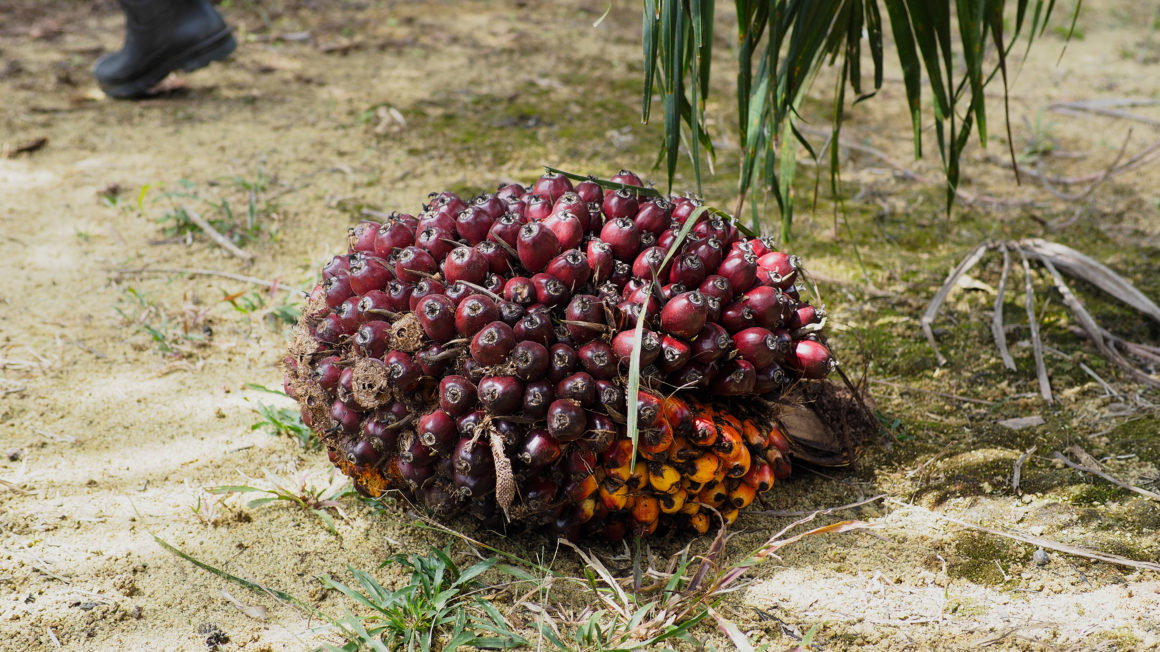 Palm oil fruit, ca. 20kg