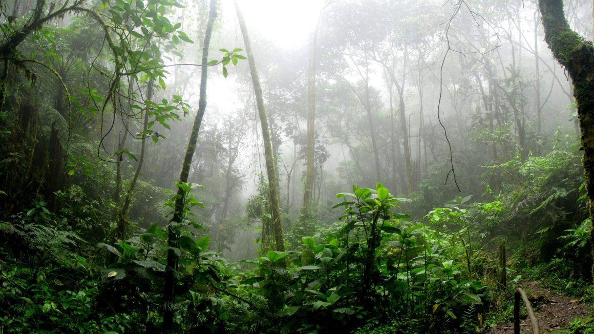 Bos en CO2