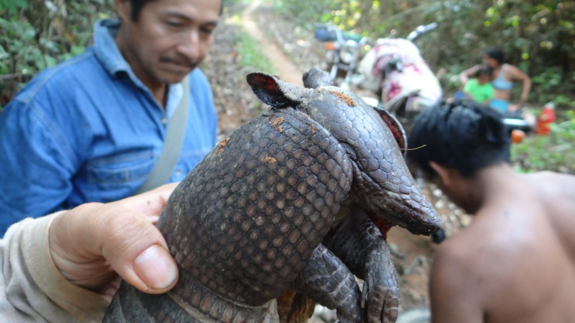 Armadillo-©-Vincent-Vos-Large.jpg