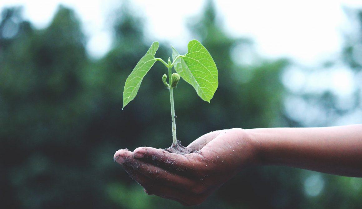 growth-hand-little-1072824