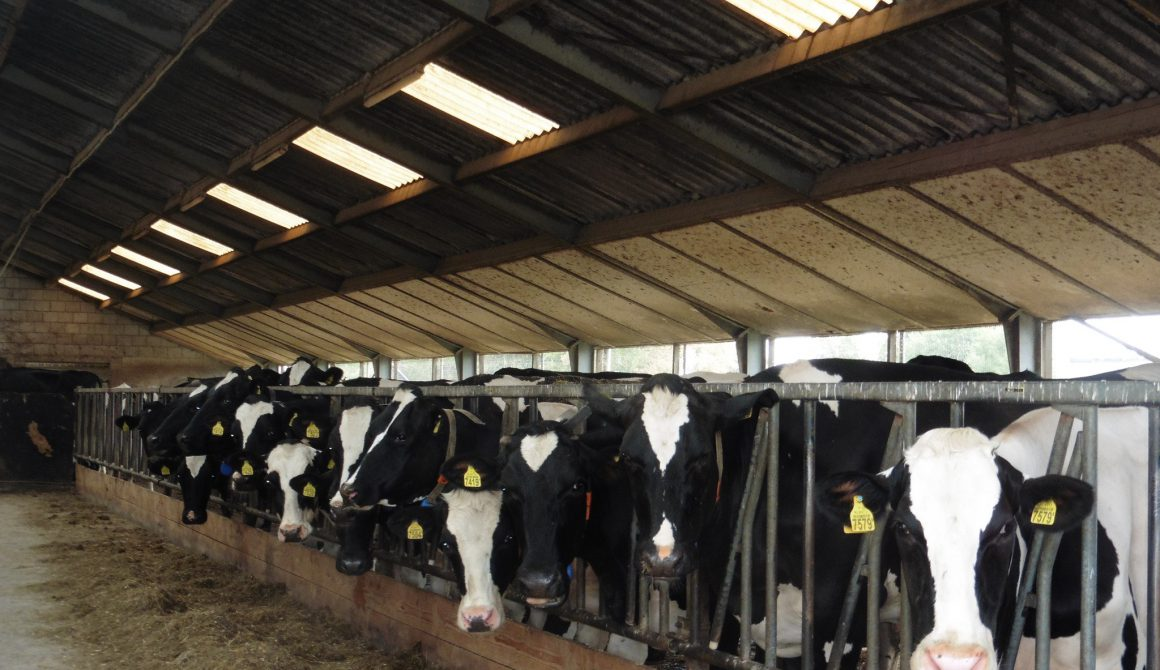 koeien-gelderland.jpg