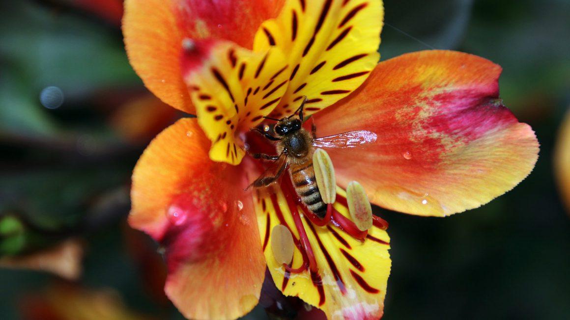 biodiversiteit_kan_mij_t_schelen_1920x1080_foto_artis_sem_viersen.jpg__1920x0_q85_subsampling-2.jpg