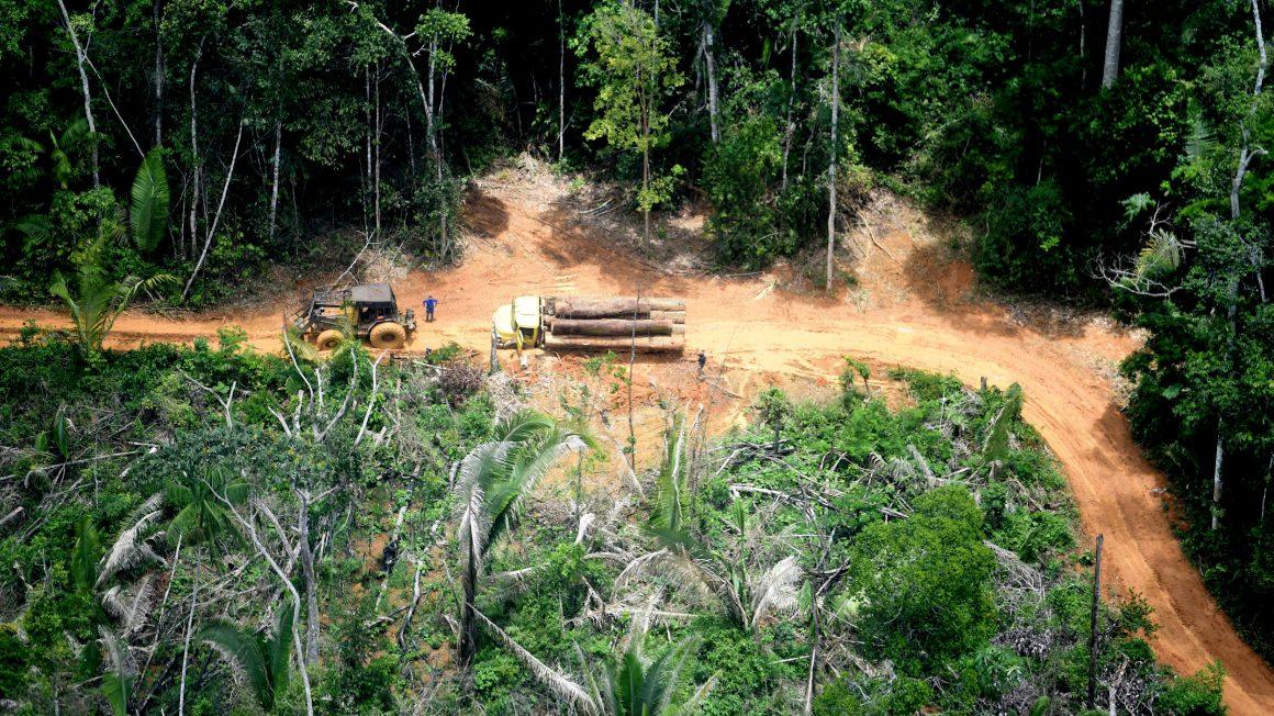 Karipuna Indigenous Land in RondôniaTI – Karipuna (Rondônia)