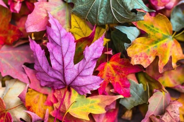 Beeld-autumn-webinar.jpg